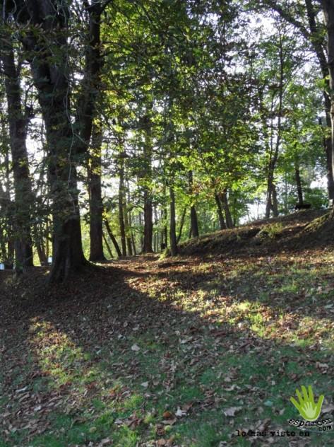 Zona boscosa en el Parque Santa Barbara o la Acebera  lugones